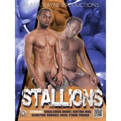Stallions DVD (13490D)